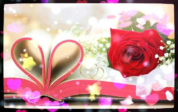 壁纸 花 桌面 1062_671
