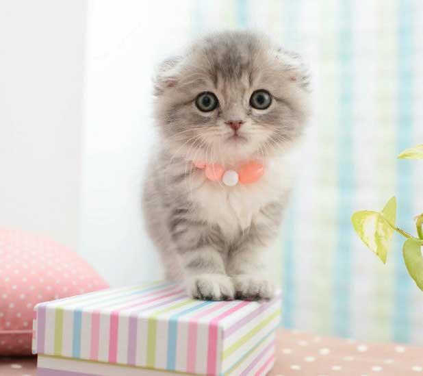 可爱猫咪看书头像