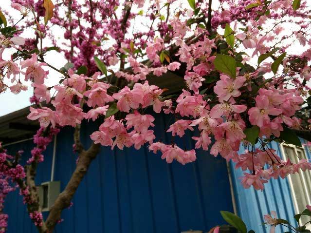 折纸杨桃花花步骤图解